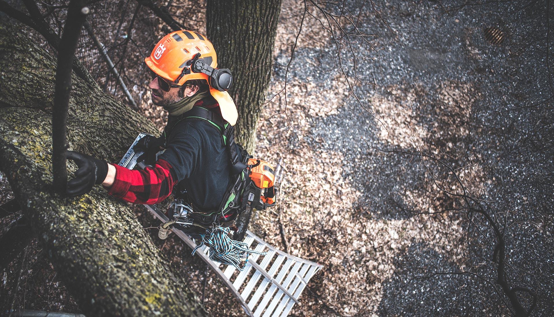 Arboriculture et élagage de vos arbres et arbustes.